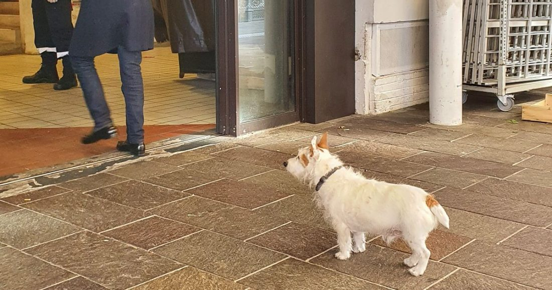 Dog practicing social distancing at the Victor Hugo Market in Toulouse.